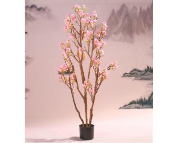 Сакура японская цветущая
