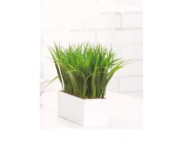 Весенняя трава