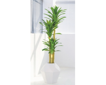 Драцена (бразильское дерево)