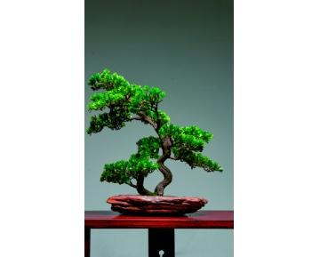 """Бонсай """"Самшитовое дерево"""""""