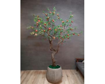 Гранатовое дерево