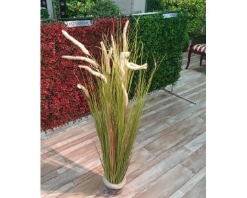 Трава Лисий хвост